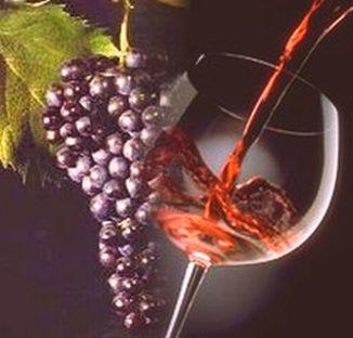 Stappato il vino novello 2012 Dalla Calabria 80mila bottiglie