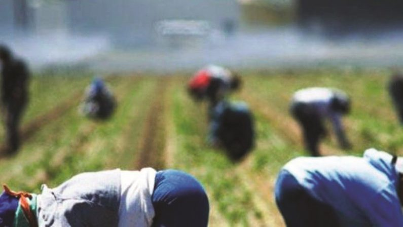 Braccianti agricoli sfruttati, operazione in PugliaPesanti sanzioni per un imprenditore calabrese