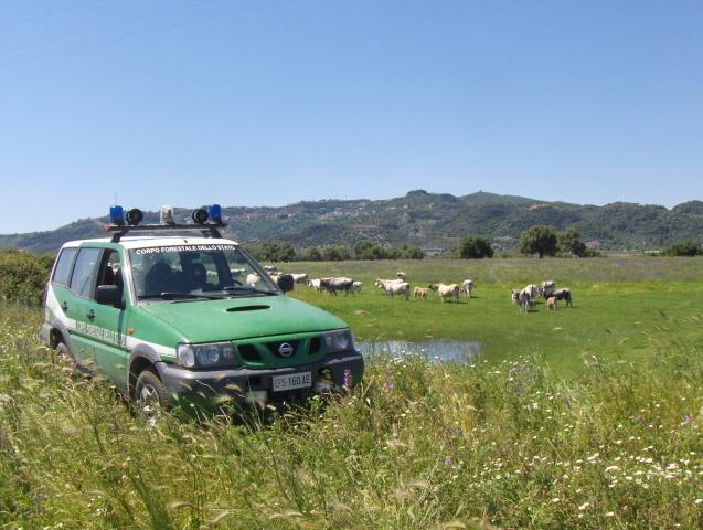 Pescavano trote con la corrente elettrica: tre persone denunciate a Crotone