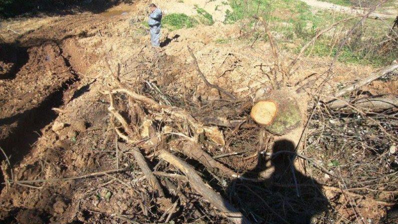 Taglio di alberi senza autorizzazioneDue denunce in due diverse operazioni