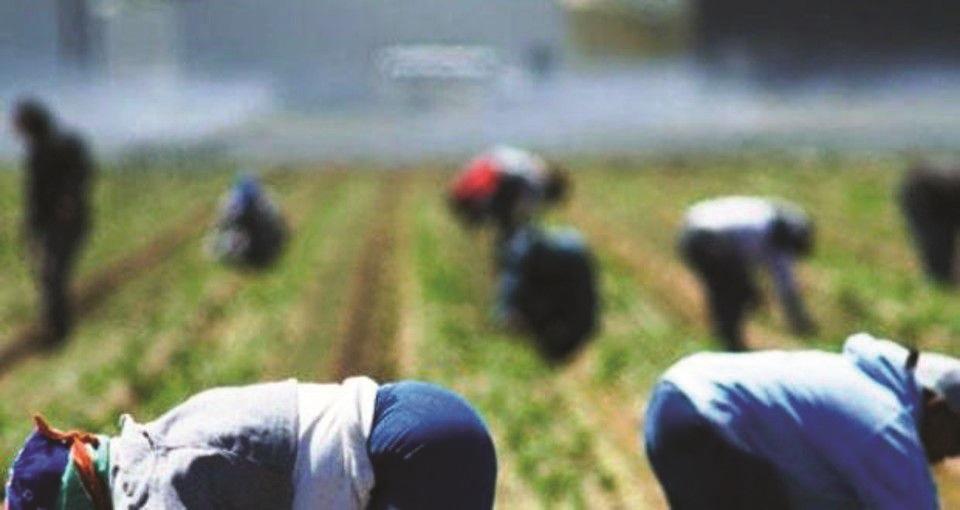 Quattrocento lavoratori agricoli stagionali in bilico, chiesto un incontro al prefetto di Cosenza