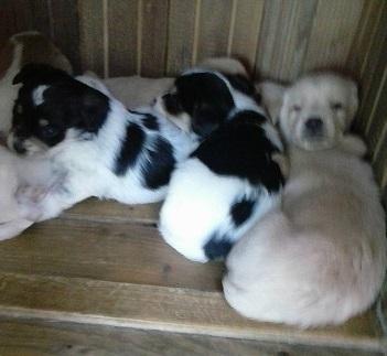 Salvati un gruppo di cuccioli, erano stipati in un contenitore della spazzatura