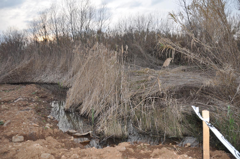 Cadavere trovato in zona di campagna a LameziaLa procura dispone l'autopsia sul corpo dell'uomo