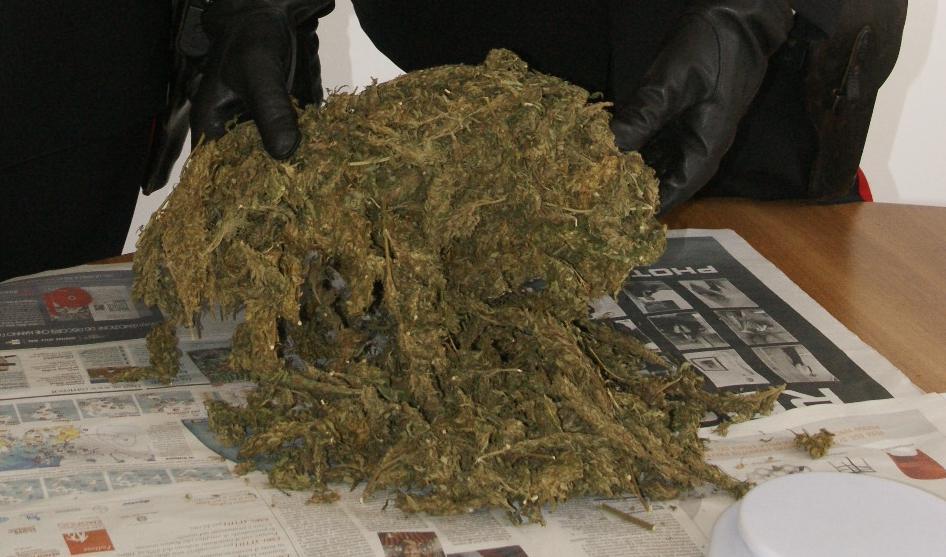 Napoli, sorpreso con 50 piante di cannabis in casa