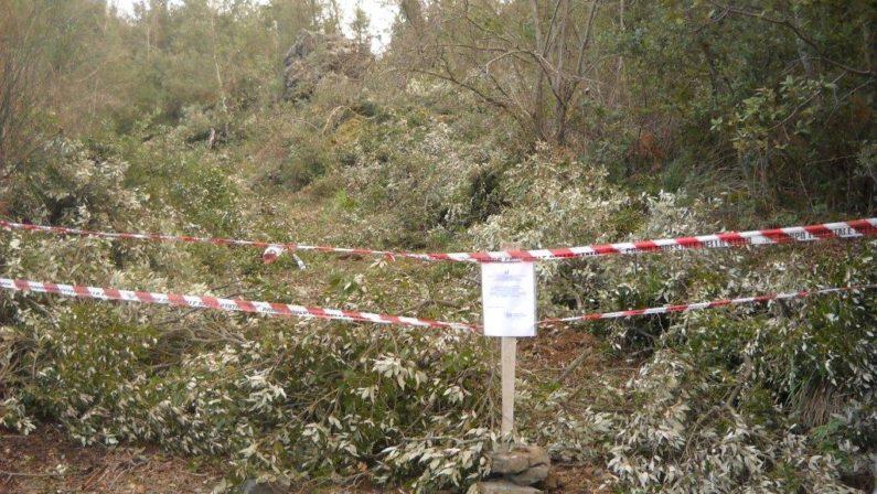 Taglio abusivo di alberi nel Parco del PollinoIl Corpo forestale denuncia quattro persone
