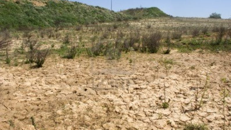 Coldiretti lancia l'allarme per la siccità, -80% di pioggia in Italia. Al Sud è crisi in agricoltura