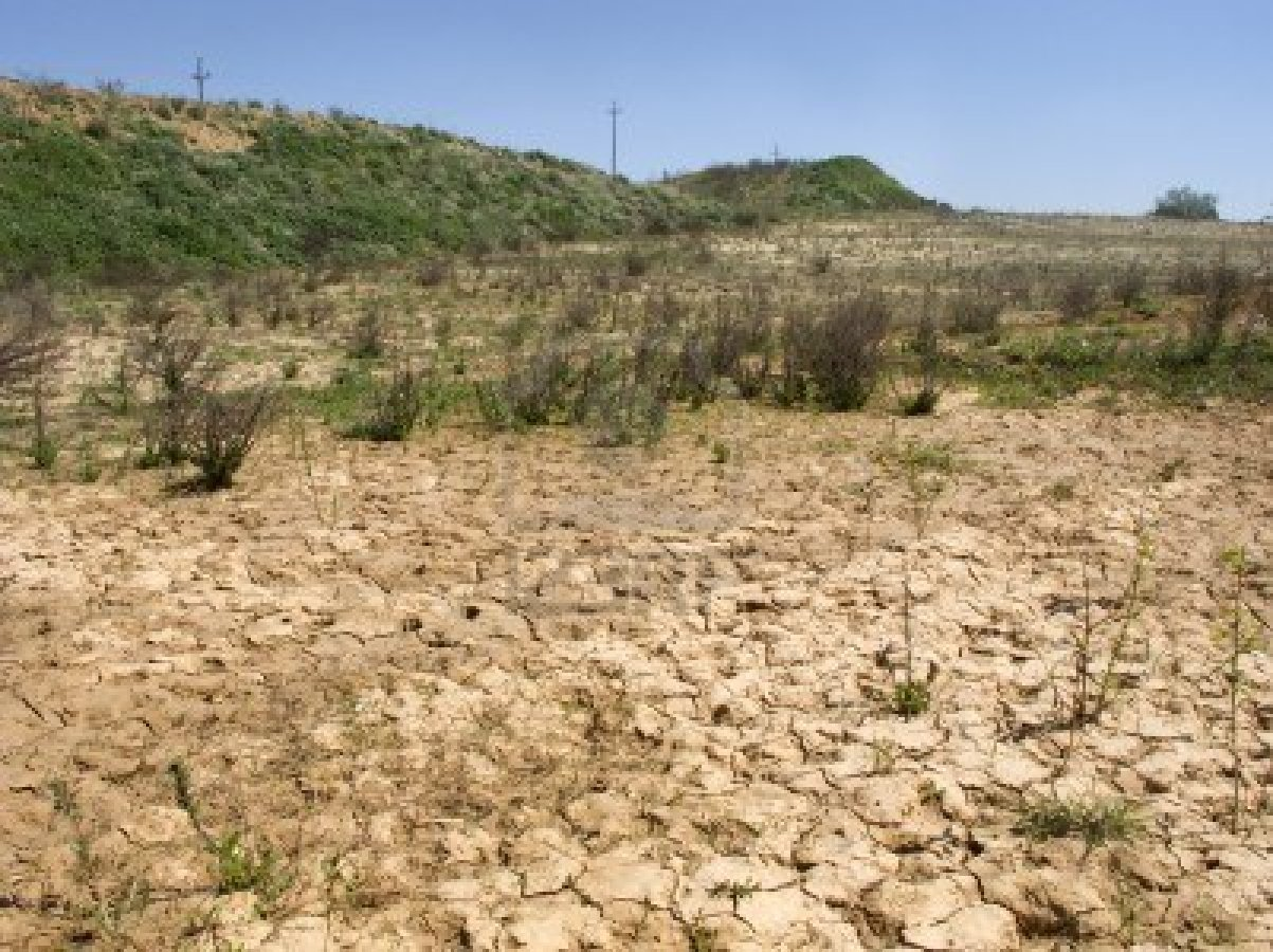 Scatta allarme siccità per l'agricoltura calabreseColdiretti: «Piogge dimezzate, colture a rischio»