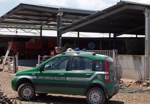 Capannone abusivo destinato al ricovero di bovini sequestrato nel Crotonese