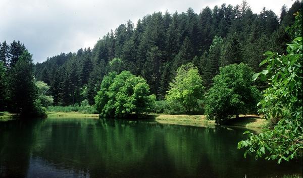 Il Parco della Sila come riserva dell'UnescoEletti i componenti della Fondazione
