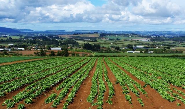 La bugia agricola dell'autonomiaI fondi europei e le Regioni da abolire