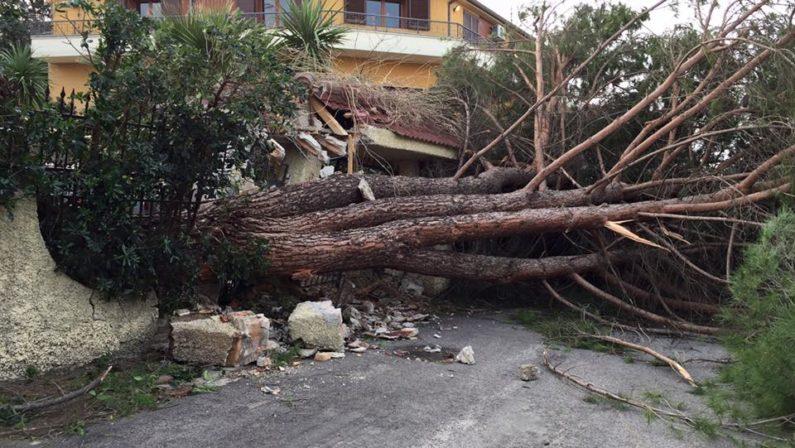 Muore contadino in provincia di Reggio Calabriacolpito da un grosso albero abbattuto dal vento