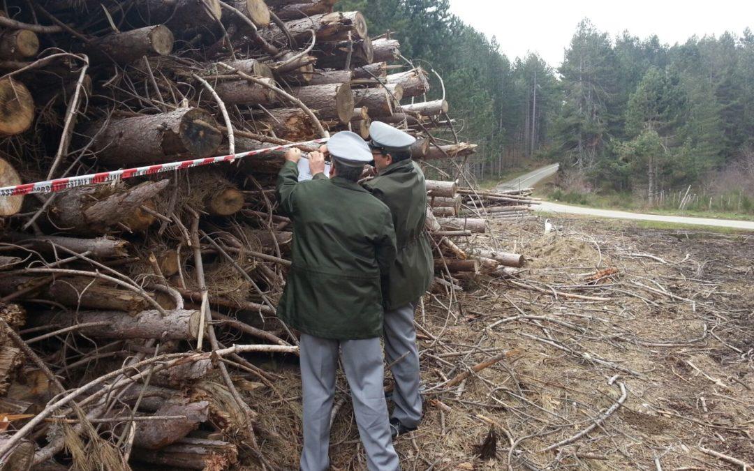 Un sequestro del Corpo forestale