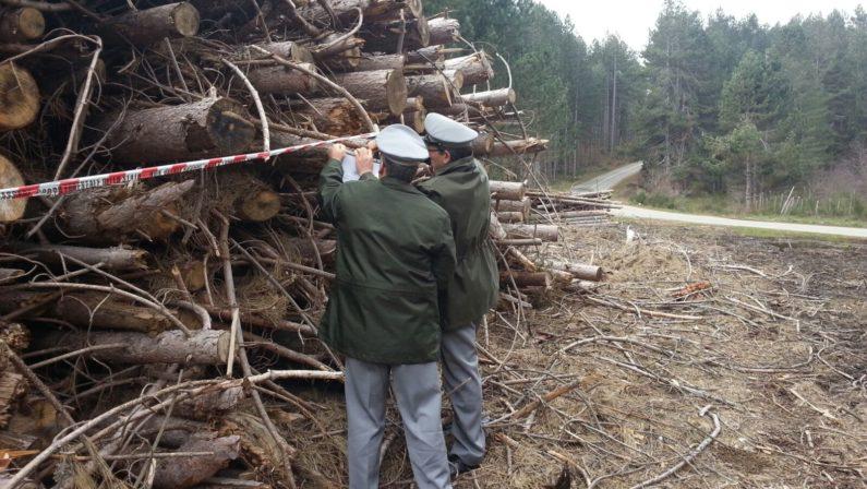 Truffa e abusi sul taglio di un bosco nel CosentinoSequestrati quaranta ettari, dieci denunce