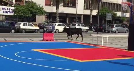 Un toro semina il panico sul lungomare di Reggio Calabria