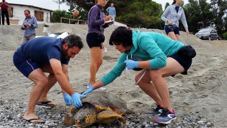 Oggi la Giornata mondiale delle tartarughe marineIn Calabria sono molti i progetti avviati dal Wwf