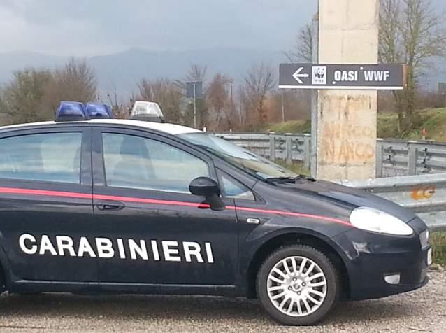 I Carabinieri scoprono piantagione di marijuana a Montecalvo