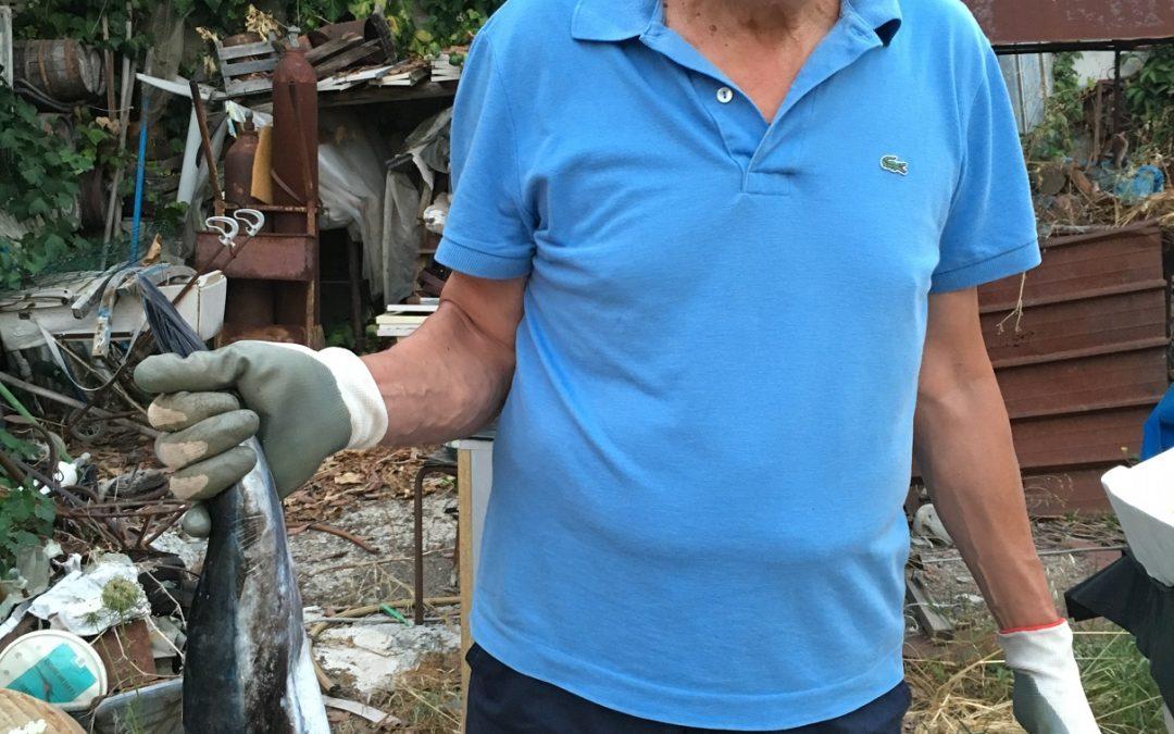 L'esemplare di pesce palla pescato a Pizzo