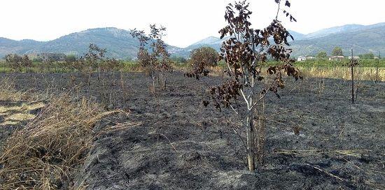 Sessa Aurunca, fiamme ai terreni confiscati al clan Moccia: si segue la pista dolosa