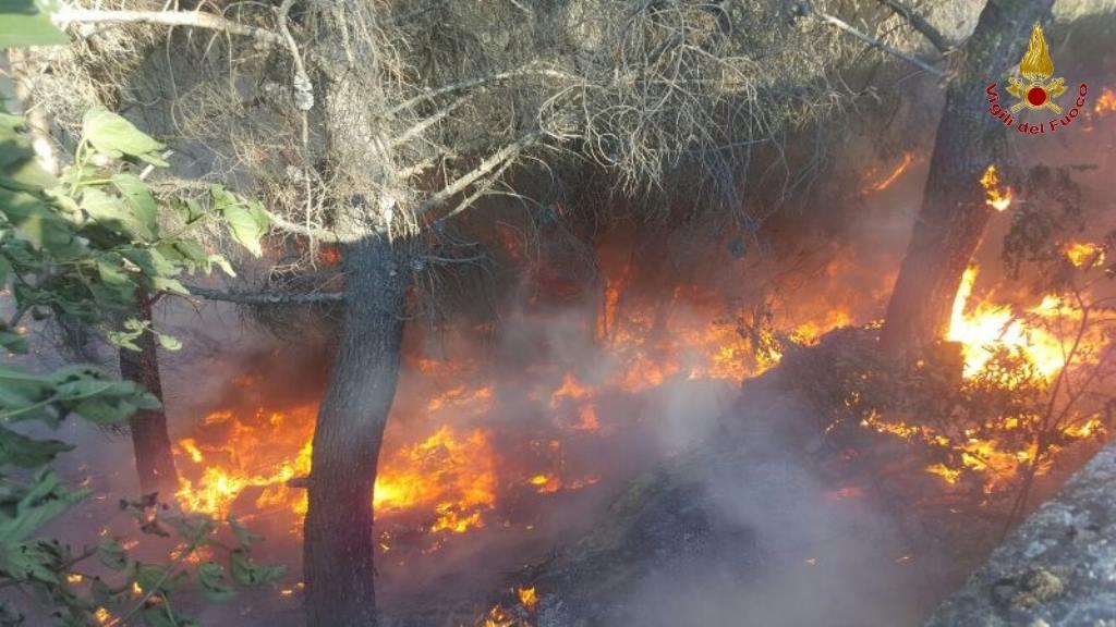 FOTO - Incendio nel Crotonese, danni ingentiFiamme divorano aziende e automezzi