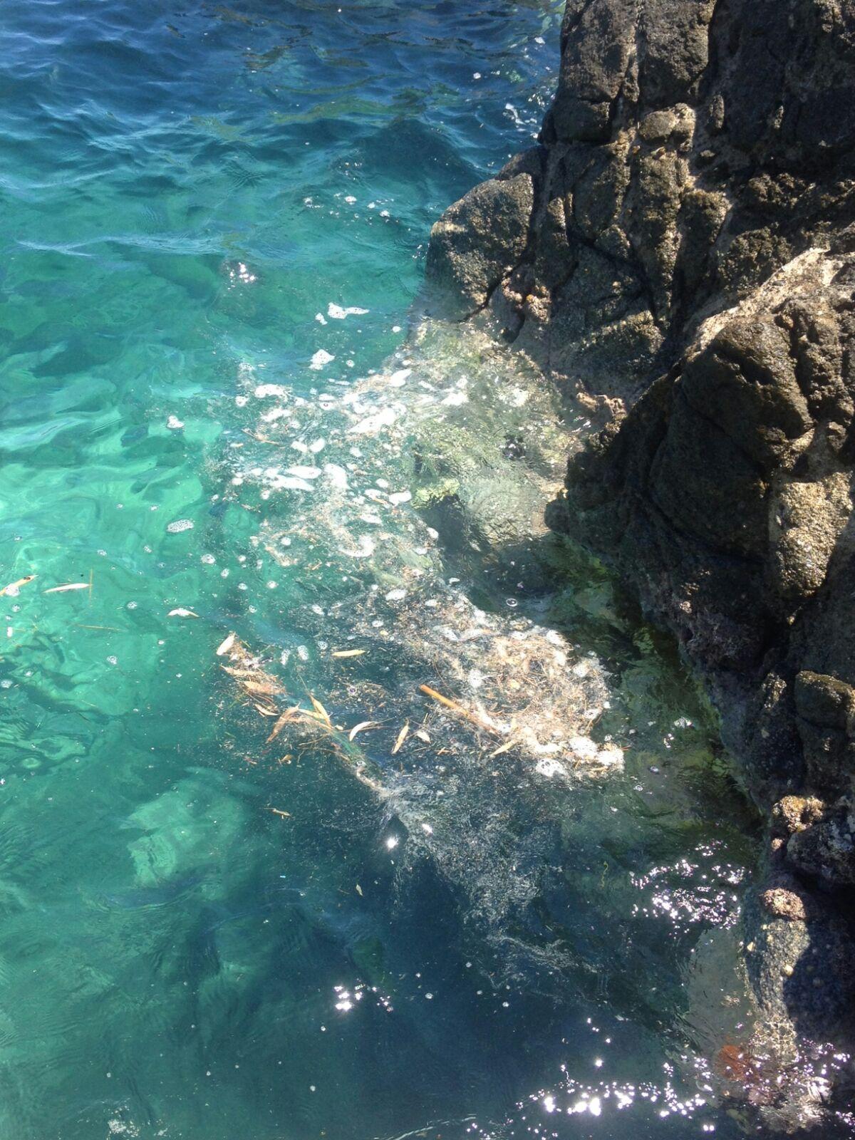 Mare sporco, degrado crescente e insopportabileTutti gli anni in estate gli stessi problemi