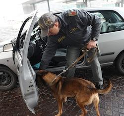 Il cane antidroga fiuta la marijuana nella valigiaDenunciata una donna alla stazione di Lamezia