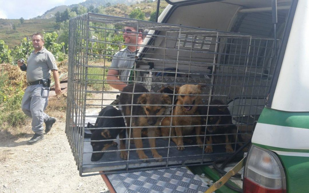 Animali rinchiusi in box e gabbie, atroce scoperta nel casertano