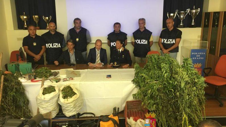 Maxi piantagione di canapa nel Materano, polizia arresta padre e figlio: sequestrati 4.000 arbusti