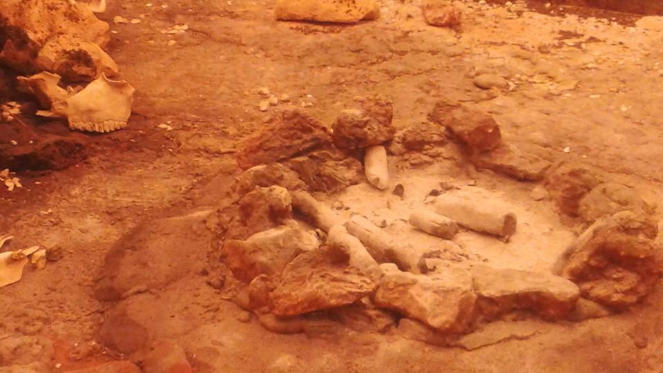 Il fossile lucano da record (ma dimenticato) che racconta la storia dell'evoluzione della Terra