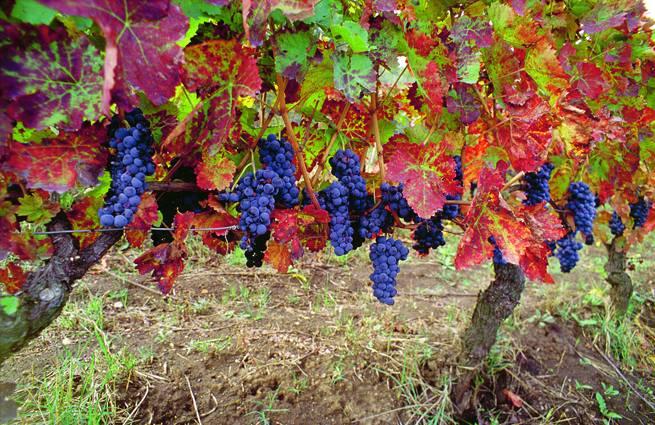 Non solo Aglianico: i vini lucani si promuovono oltre i confini della Basilicata