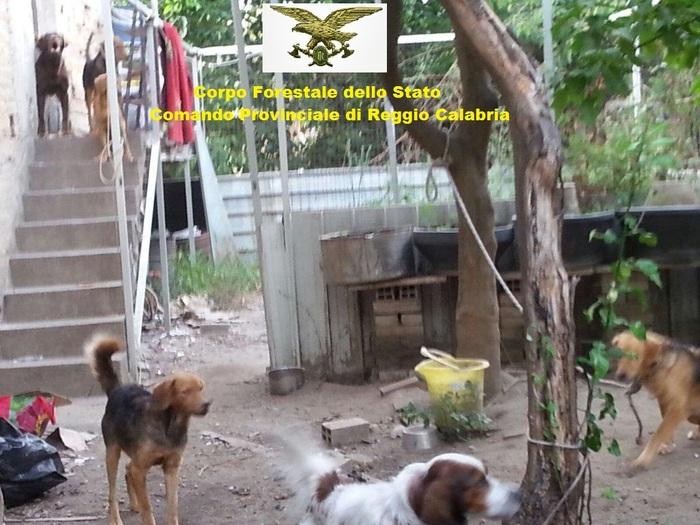 La villa occupata con cani e gatti