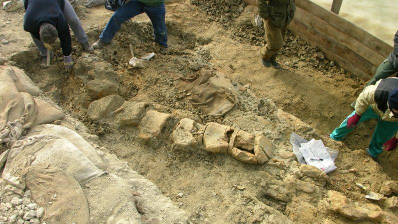 Interrogazione al ministro Franceschini sul fossile di balenottera dimenticato nel Museo di Matera