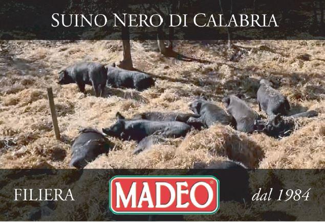 Premiata la Filiera Agroalimentari Madeo  Menzione d'onore Good Pig  per l'allevamento del suino nero di Calabria