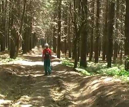 Sulle montagne del Partenio a cercare funghi: anziano disperso