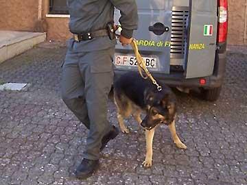 Scoperta casa dove trovare droga di ogni genereDopo la perquisizione arrestato un giovane lametino
