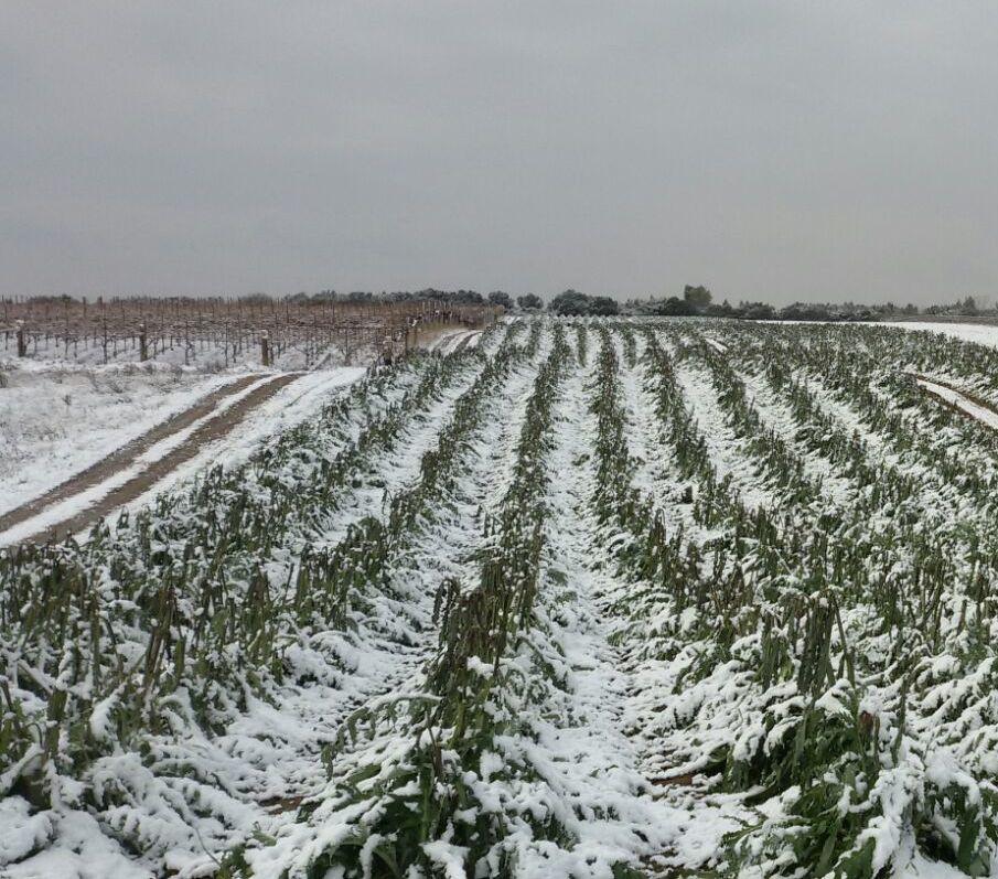 Agricoltura, dopo i danni del maltempo anche la speculazione: nei mercati prezzi alle stelle