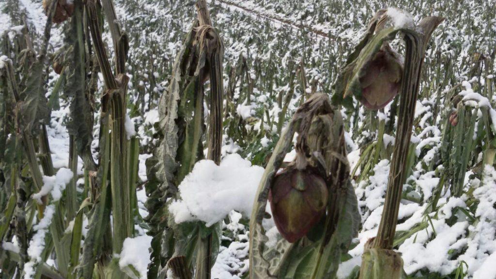 Inverno pazzo, dopo il gelo di gennaio agricoltura a rischio per il caldo di febbraio