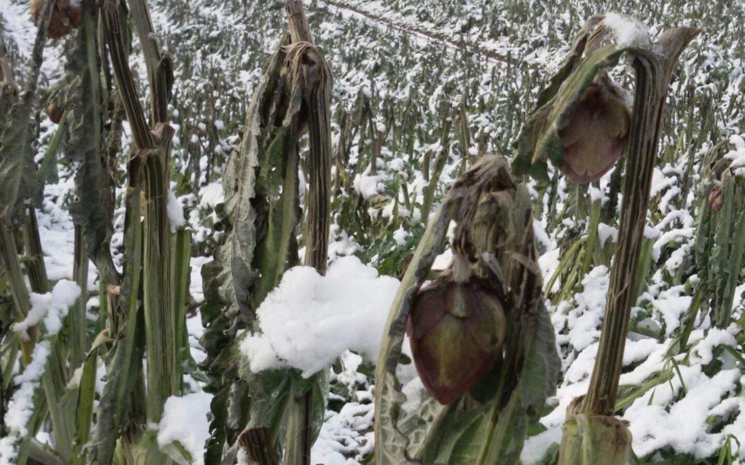 Danni da gelo a gennaio sulle colture in Basilicata
