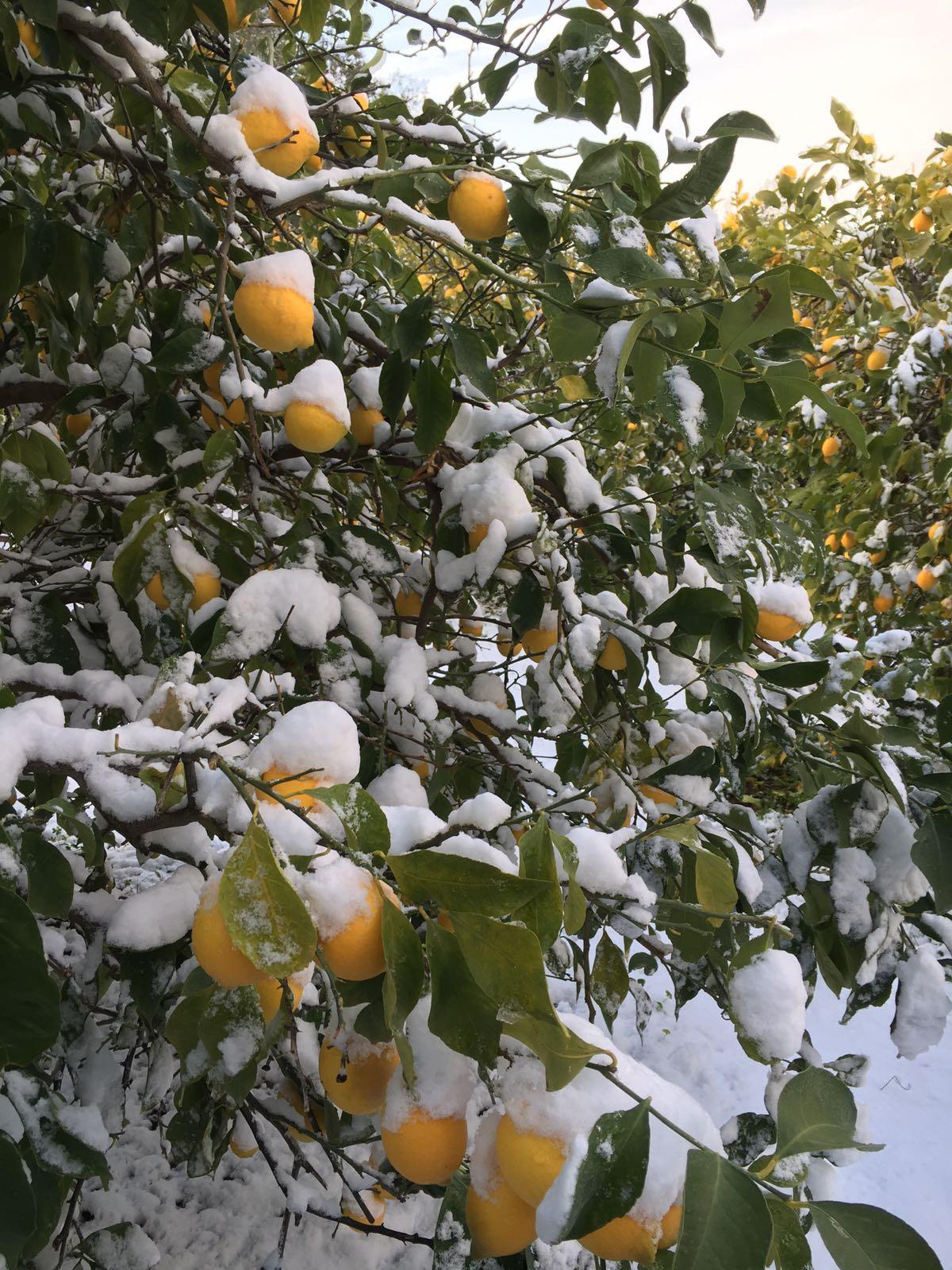 Maltempo, disagi in tutta la Calabria centro - settentrionale per le nevicate della scorsa notte