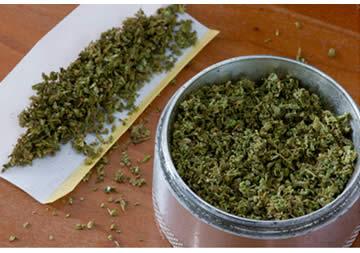 Della cannabis essiccata