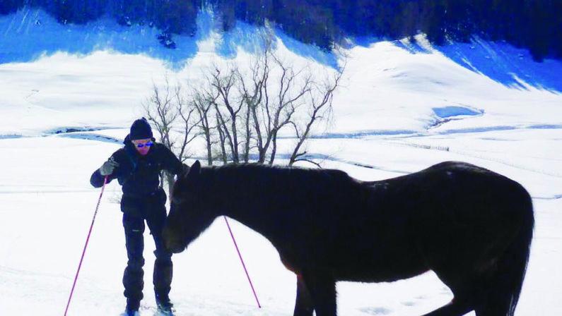 La Sila si trasforma in trappola di ghiaccio per un cavalloDa giorni si cerca di salvare l'animale bloccato dalla neve