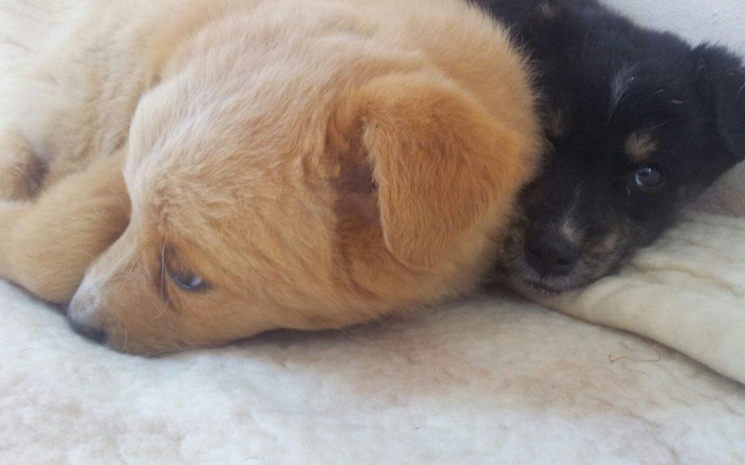 Strage di cani sulla costa tirrenica cosentina: a Verbicaro trovati dieci avvelenati
