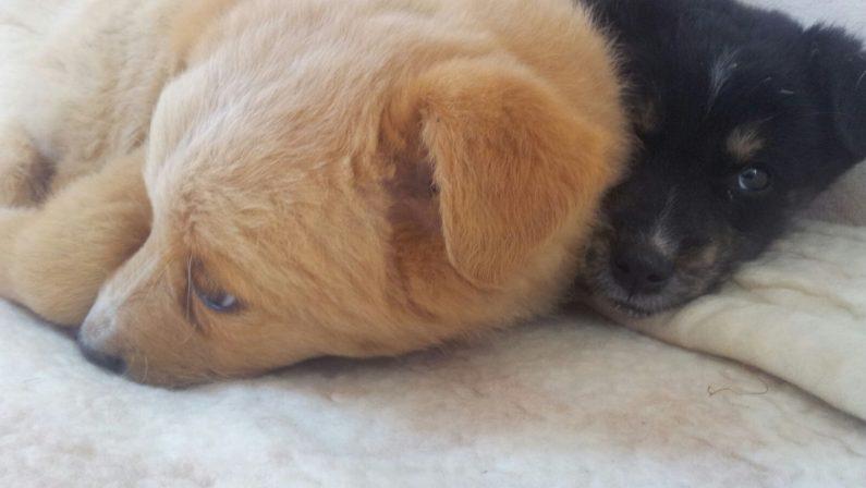 Strage di cani sulla costa tirrenica cosentina:a Verbicaro trovati dieci animali avvelenati