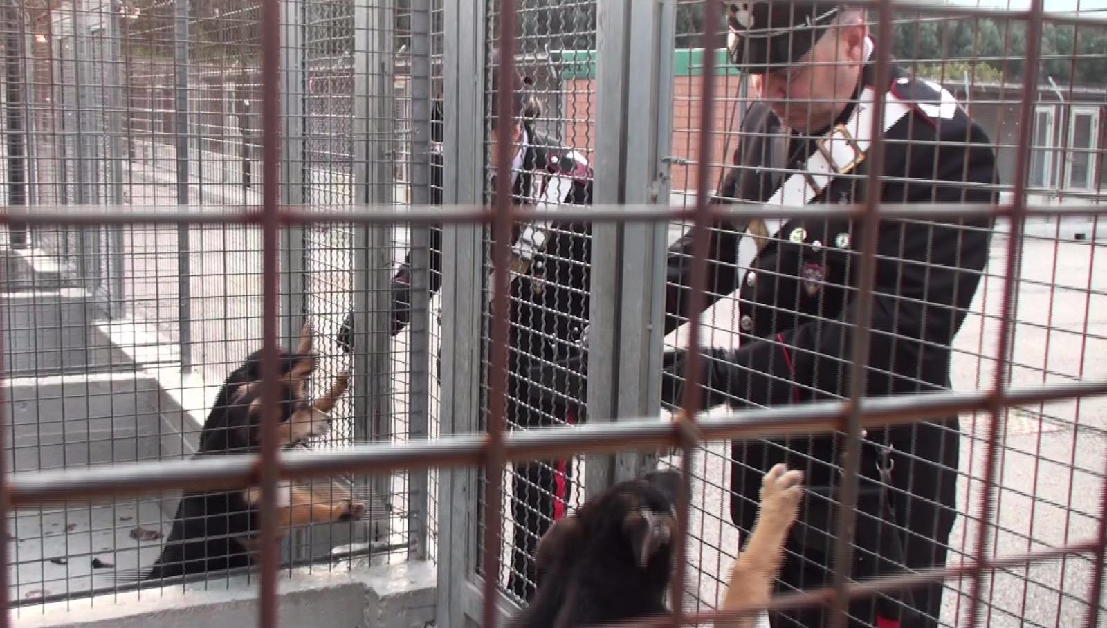 Troppi animali nel canile, denunciate otto persone in una struttura della provincia di Cosenza