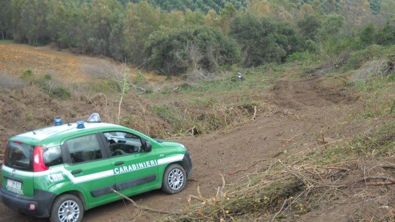 Quasi settecento piante tagliate abusivamente in provincia di Reggio Calabria, sei denunce