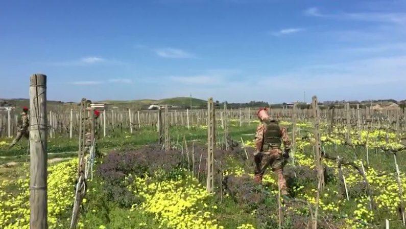 VIDEO - Omicidio Lettieri, le ricerche dei carabinieri nelle campagne di Cirò Marina
