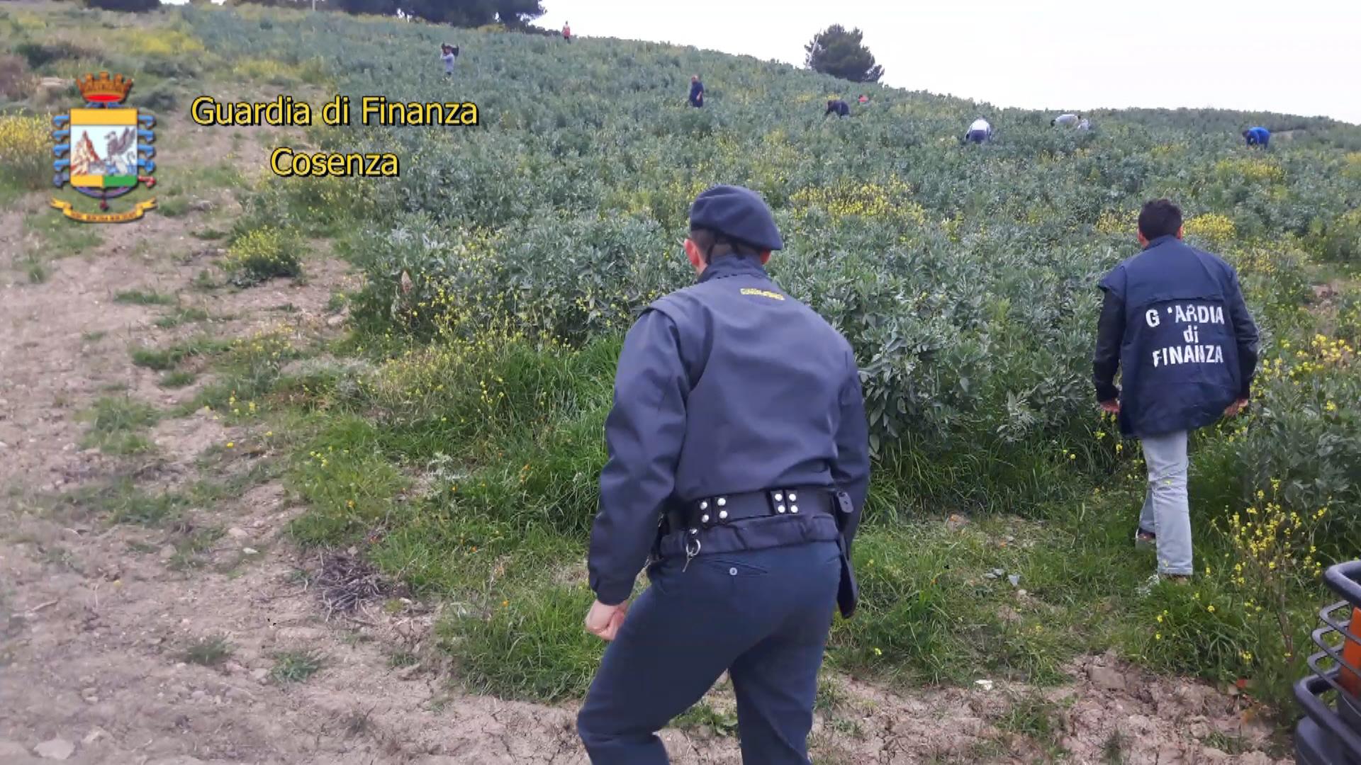 """Caporalato, conclusa operazione """"Freedom"""" al Sud  Controlli in aziende Campania, Calabria e Basilicata"""