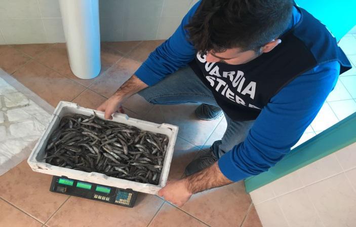 Controlli a tappeto della Guardia Costiera sul Tirreno, pesce sequestrato e multe a pescatori e commercianti