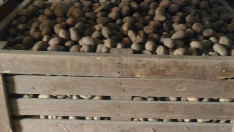 Mancato rispetto delle norme igieniche e sanitarieSequestrati oltre mille quintali di patate a Cosenza