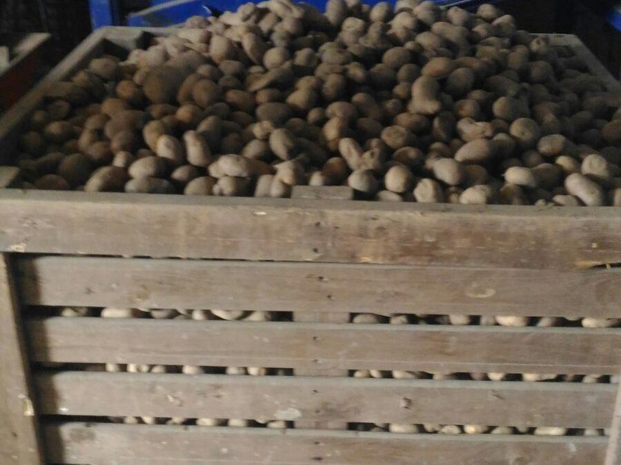 Mancato rispetto delle norme igieniche e sanitarie  Sequestrati oltre mille quintali di patate a Cosenza