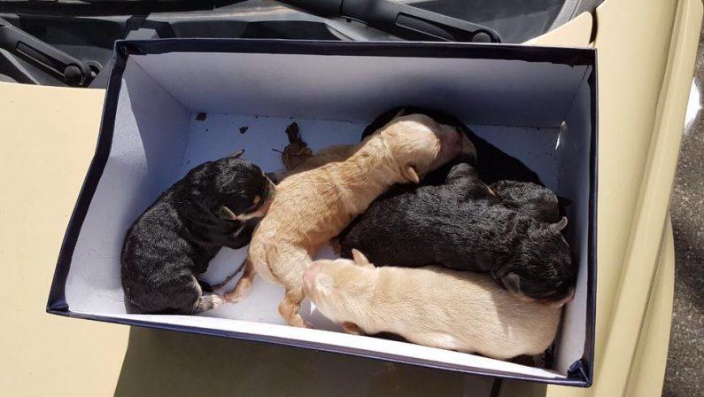Cinque cuccioli di cane salvati da una discarica abusiva dai vigili urbani a Cosenza